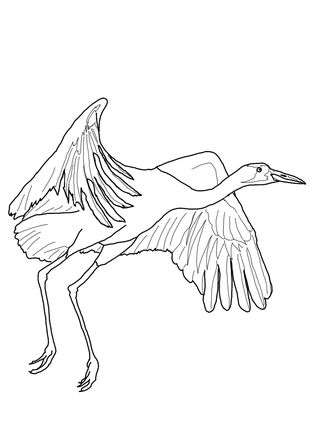 Click To See Printable Version Of Whooping Crane Fly Coloring Page
