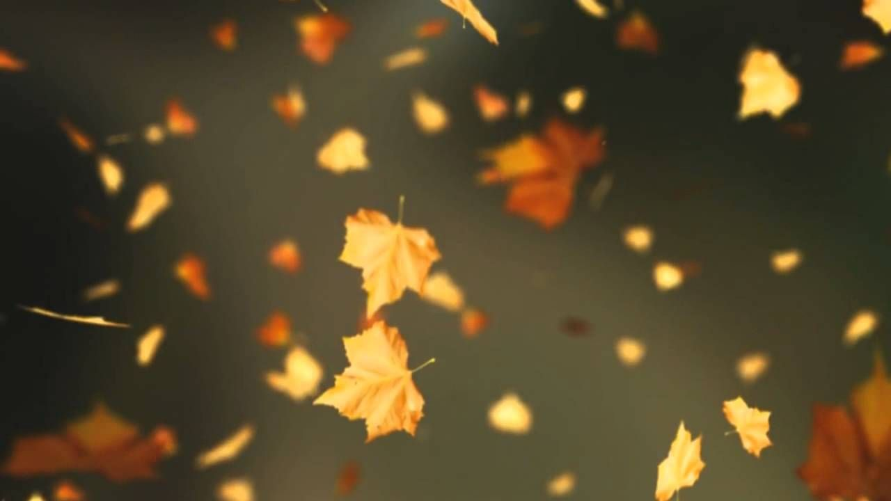 Falling Autumn Leaves Background loop 2 (Read Desc) - YouTube #autumnleavesfalling