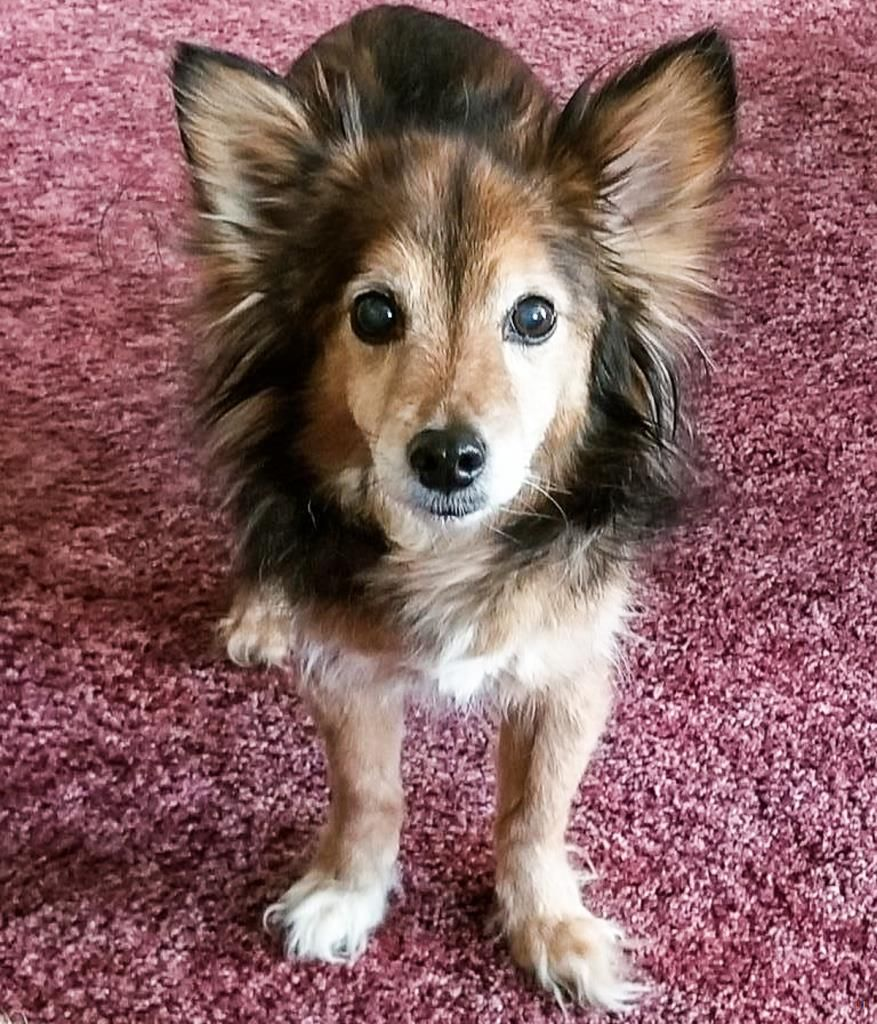 Lost Dog Male Old Brooklyn, Cleveland, OH, USA 44144