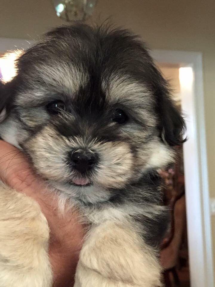 Puppies rescue cincinnati oh