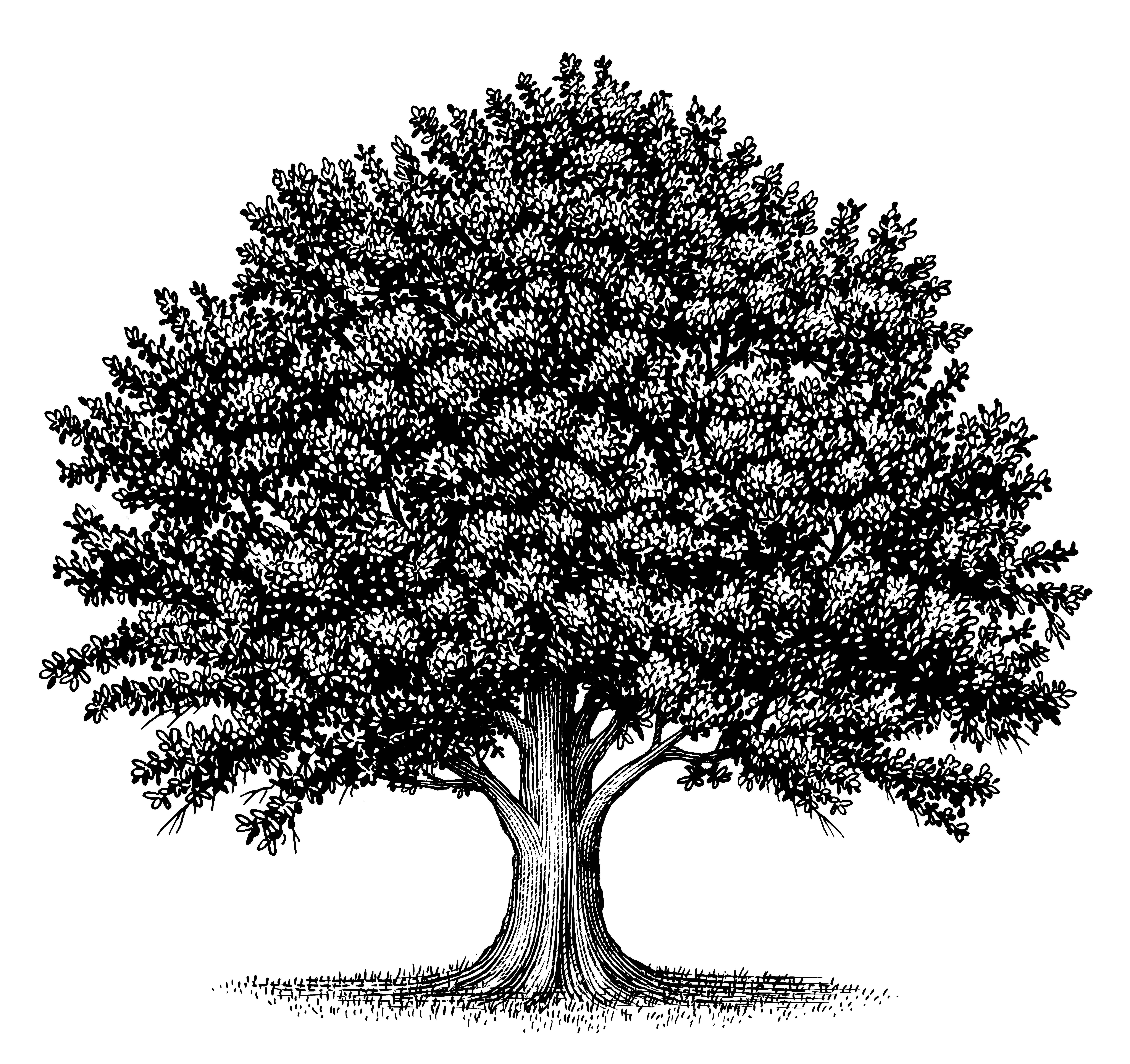 типография старинное дерево рисунок живопись, известная западе