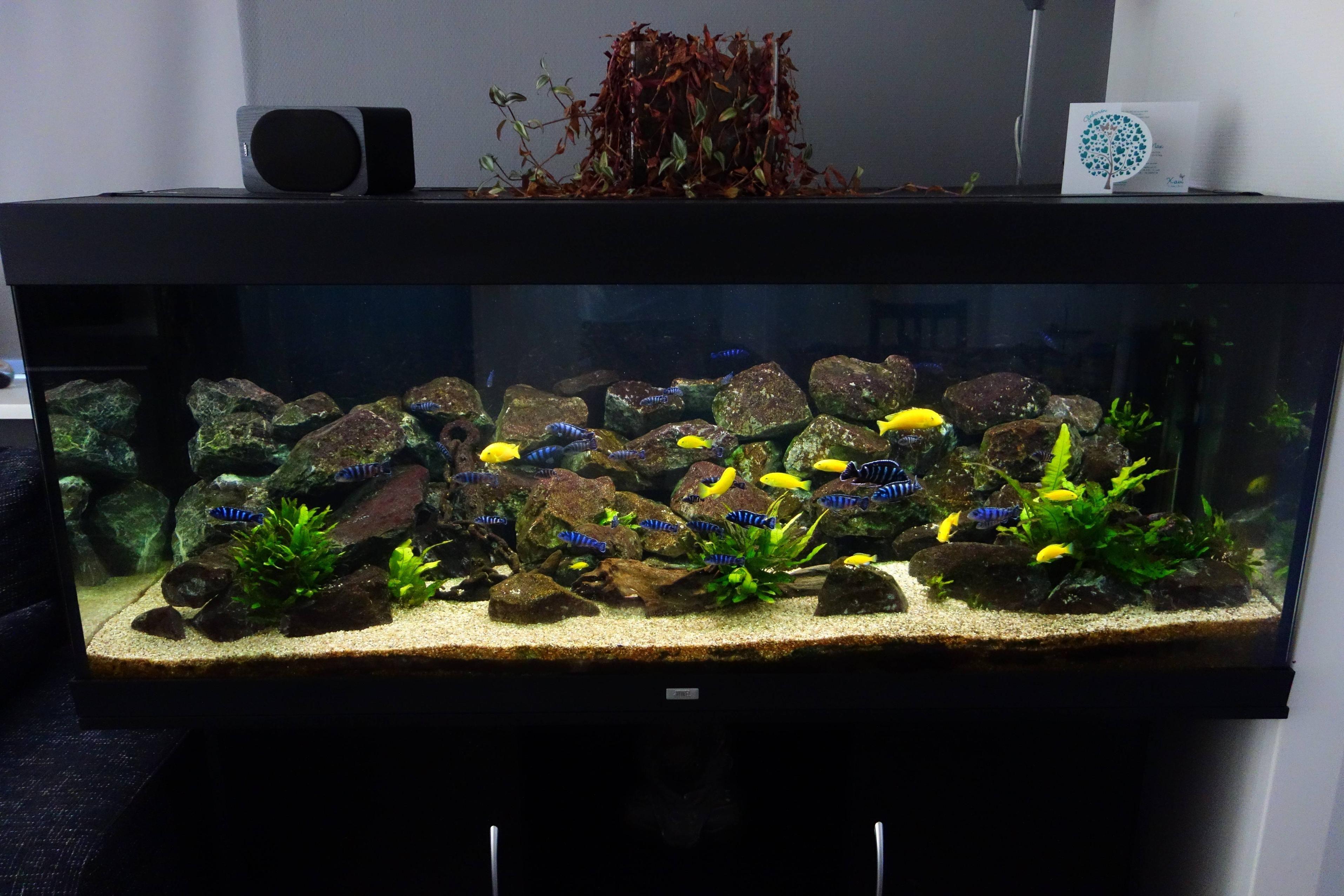 96110d670ceccc28df651ac8774e8991 Frais De Aquarium Rond Conception