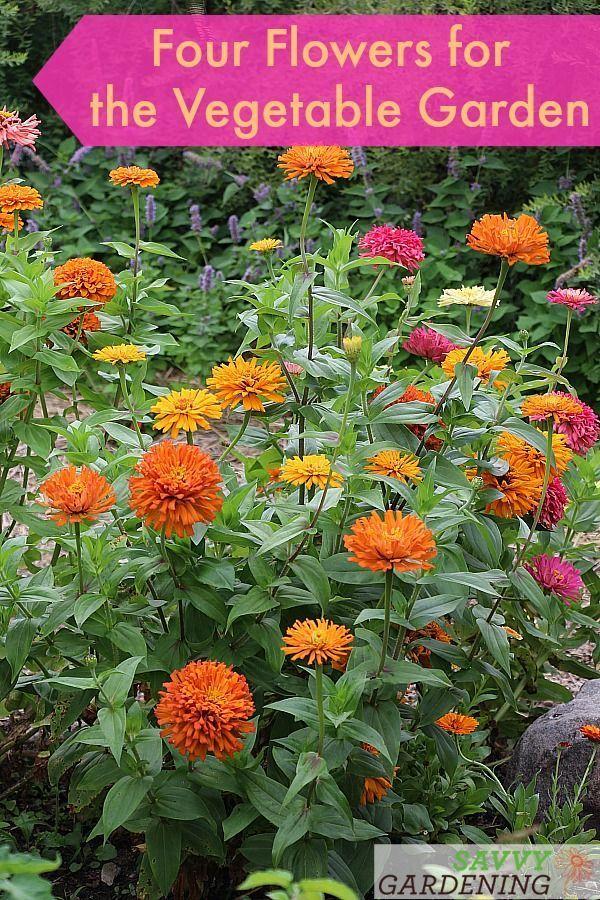 Das Pflanzen von Blumen in Ihrem Gemüsegarten fördert die Bestäubung, verschö ... #veggiegardens