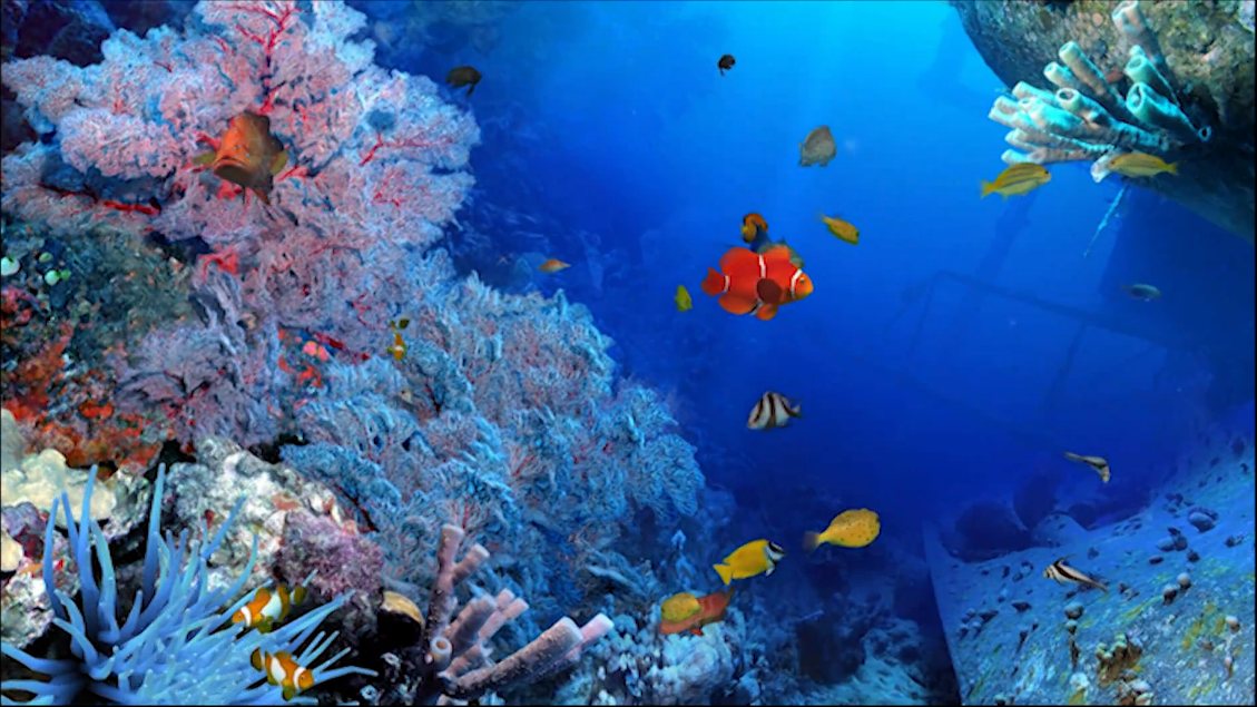 Imagenes de naturaleza en movimiento gratis en hd gratis for Bajar fondos de pantalla hd