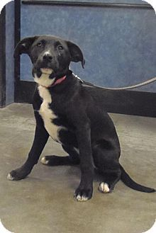 Star Is Available For Adoption From Wags Whiskers Animal Rescue