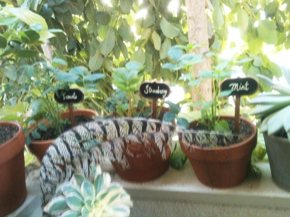 Copper Chalkboard Garden Stakes From Target. I Used A White Out Pen To Write