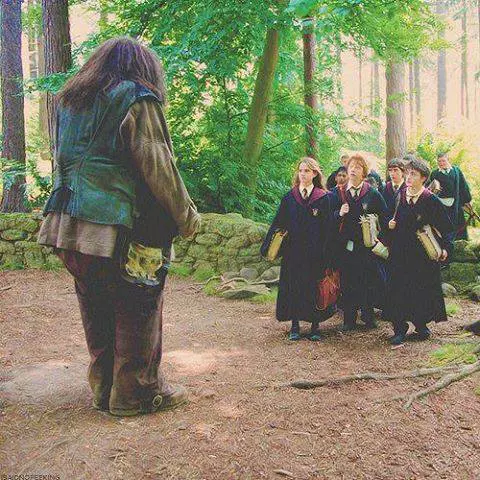 Professor Hagrid. Care of magical creatures (With images