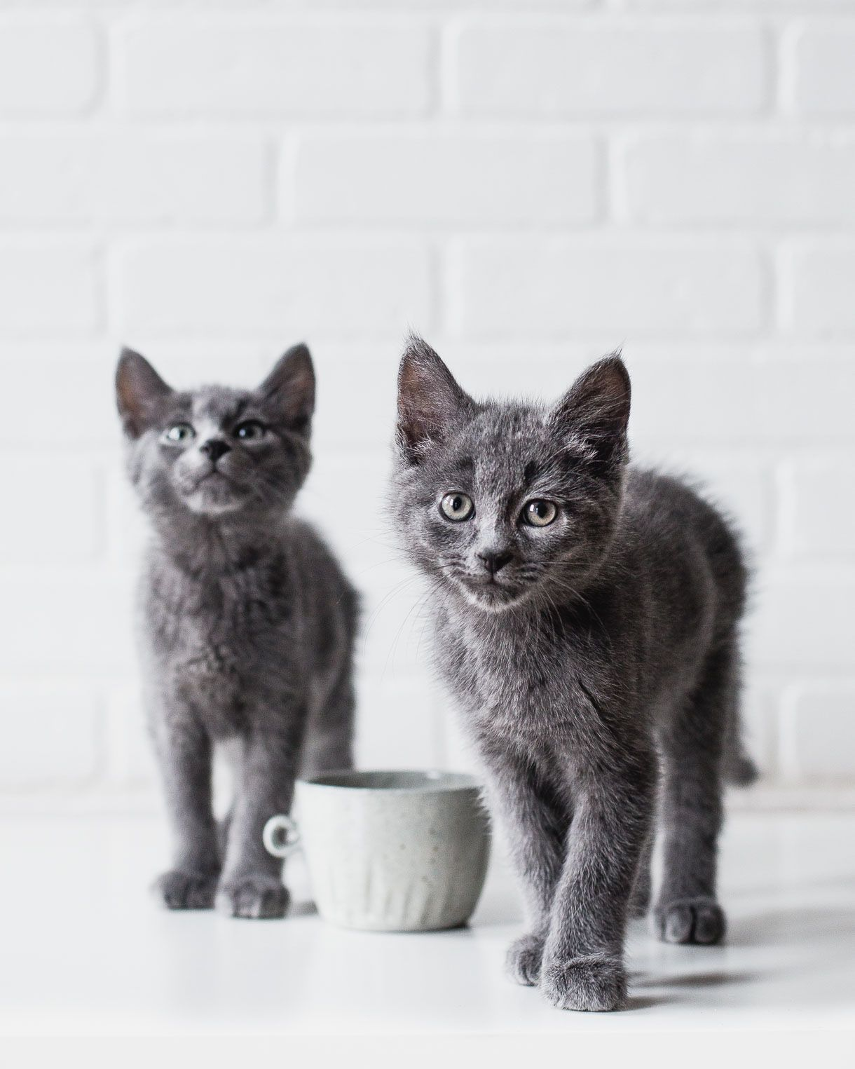 4 Good Reasons To Switch To Grain Free Cat Food Free Cat Food Grain Free Cat Food Cat Food
