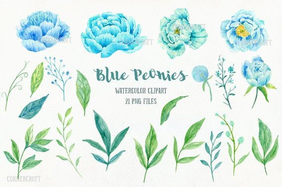 Peony Clip Art, Watercolor blue peony clipart, blue peonies, decorative elements, floral arrangements for instant download #bluepeonies