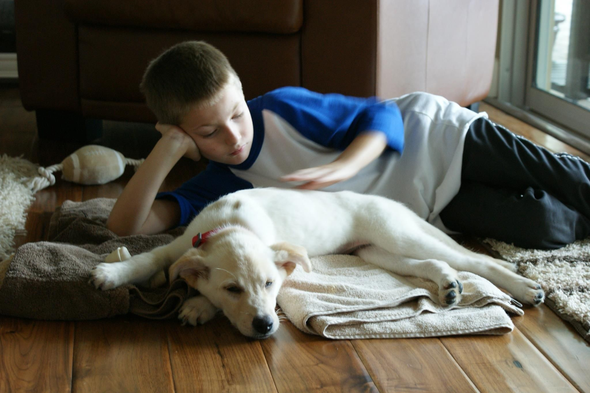 15+ Yolo county animal services ideas