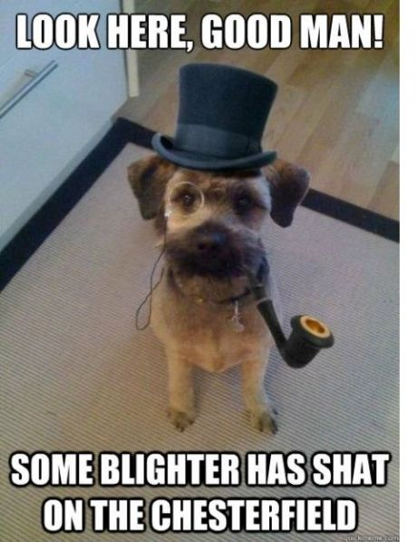 Sir Dog, look here good man, some blighter has shat on the chesterfield