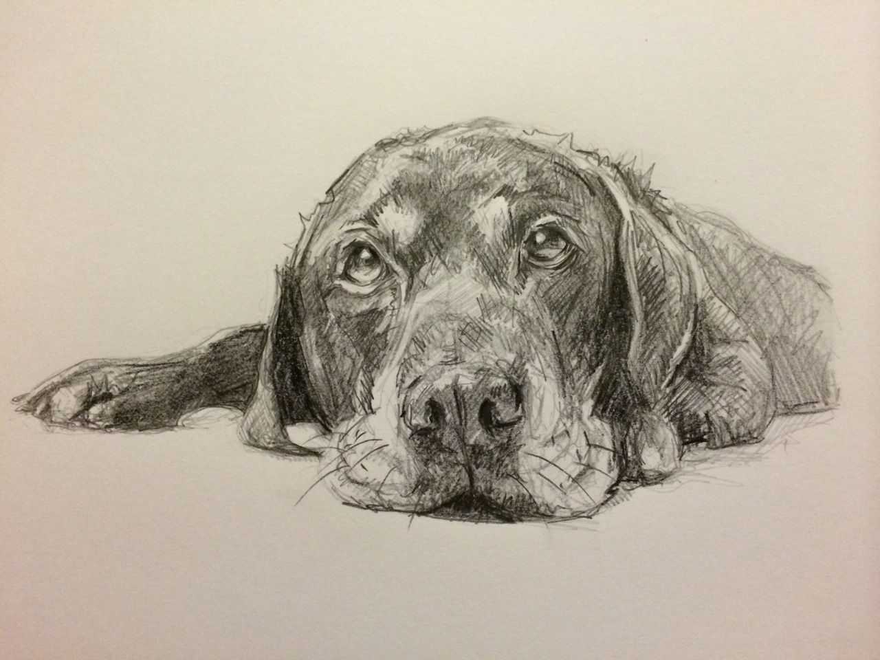 Art by Lucy Wilson Animal drawings, Dog sketch