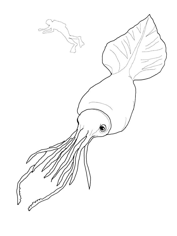 Colossal Squid Coloring Pages Squid Is A Type Of Aquatic Animal With Tentacles And Has No Vertebrae Inver Animal Coloring Pages Coloring Pages Colossal Squid