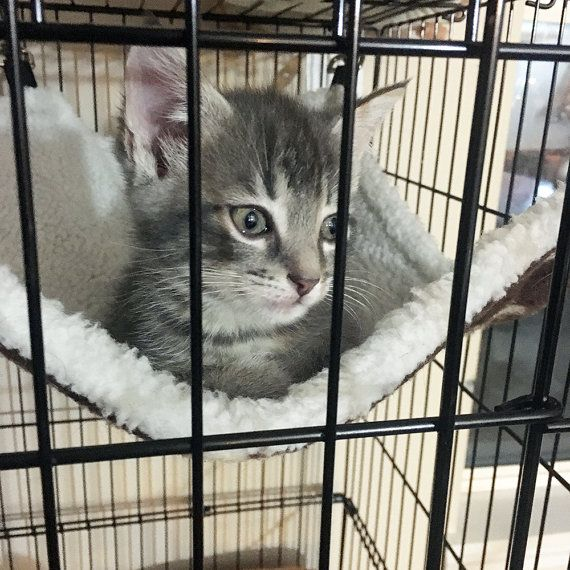 Rectangle Cat Hammock With Clasps For Kittens Cats Bunnies Ferrets Cat Hammock Cat Pet Supplies Cats