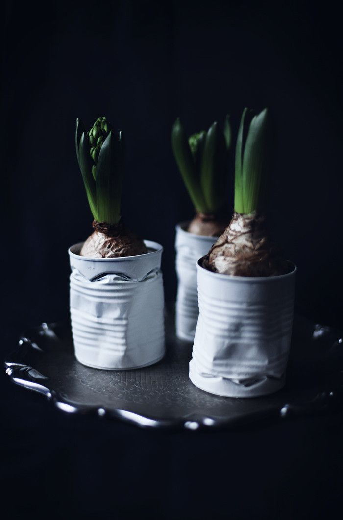 Hyacinths in tin cans / Summer sur le vif - Blog | Lily.fi