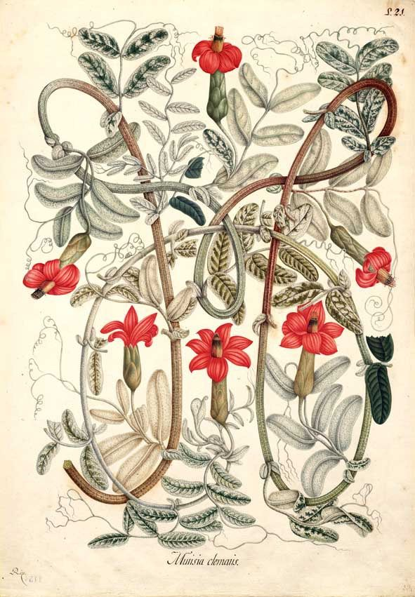 Ilustración botánica en la historia: ciencia y arte | Orgullo, Los ...