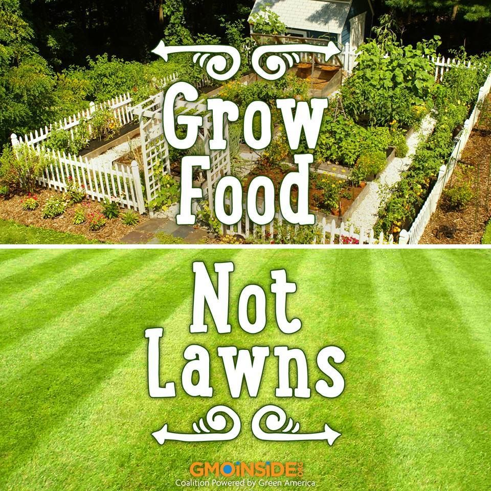 Organic food should be grown in our yards not GMO grass! Roundup will kill everything except the grass engineered to stand up to it, lawns all over the country will be green, lush—and toxic. Learn more: http://www.organicconsumers.org/articles/article_30097.cfm #GMOs #Roundup #Homesteading