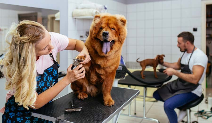 What You Need to Be A Professional Dog Groomer Dog