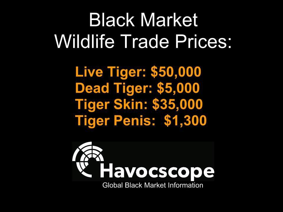 Pin On Black Market Information