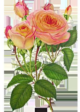 صور ورد لتصميم 2017 سكرابز ورود للتصميم 2017 Flower Painting Flowers Vintage Flowers