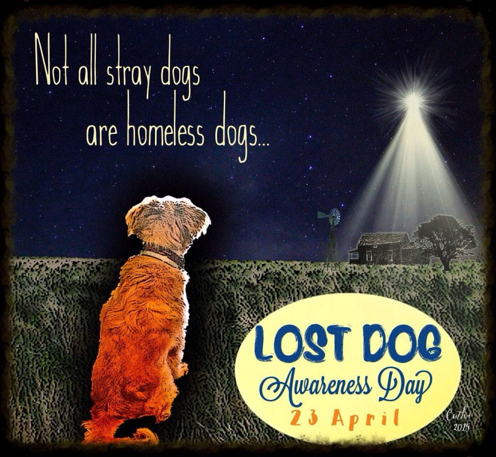 National Lost Dog Awareness Day April 23rd Losing A Dog Pet Holiday Homeless Dogs