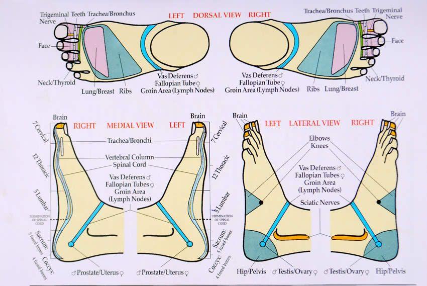 Massage Charts Reflexology Pinterest Foot Chart Reflexology