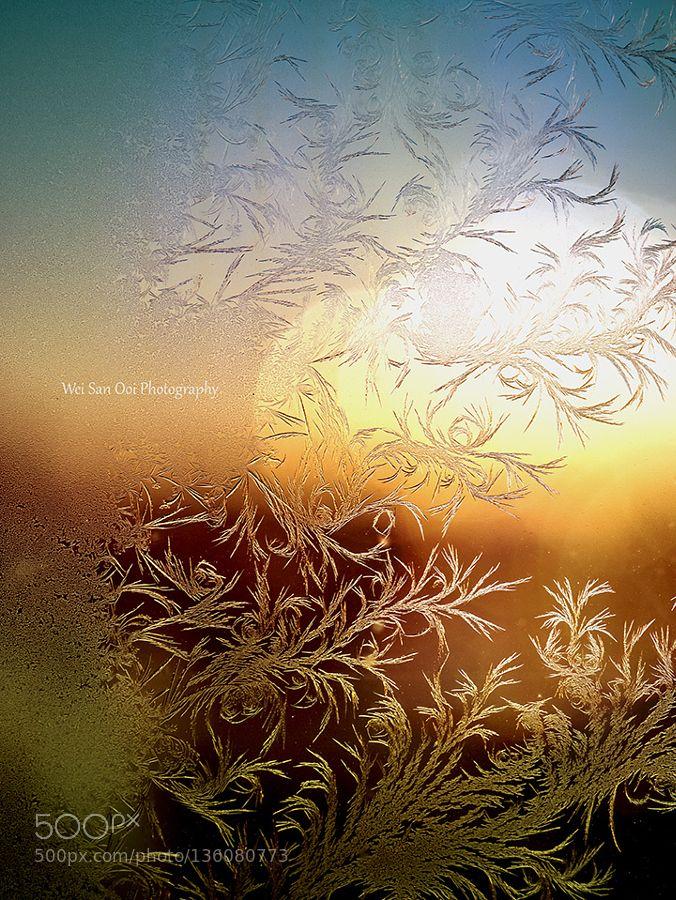 Fern Frost 07 by WeiSanOoi. @go4fotos