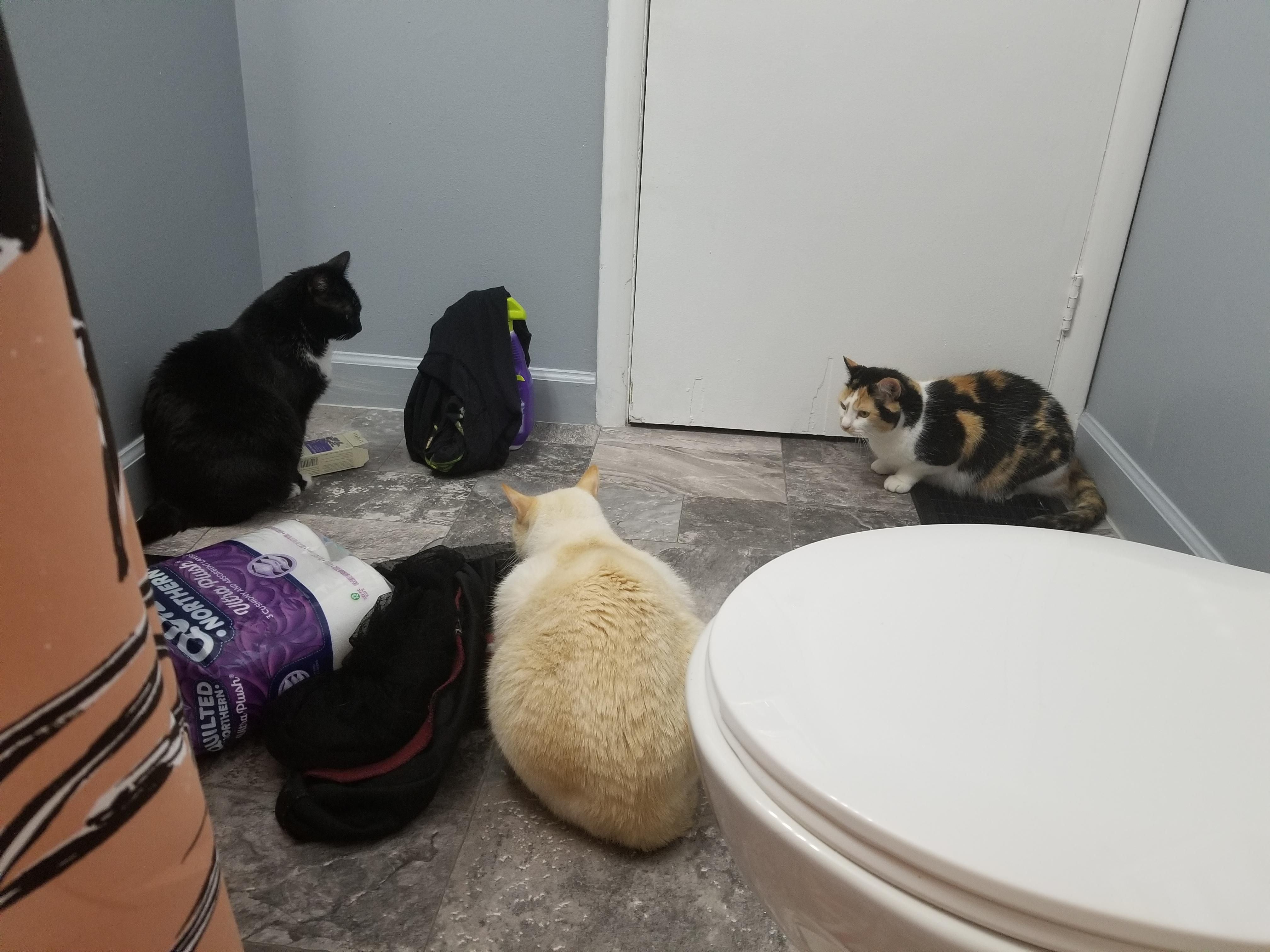 The Cats Were Crying Because I M In The Bath So Hubby Has Been Putting Them In The Bathroom With Me One By One I Don T Think This Is What Th Cats