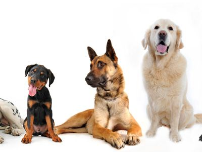 What Kind Of Dog Breed Are You? Results Dog breed quiz