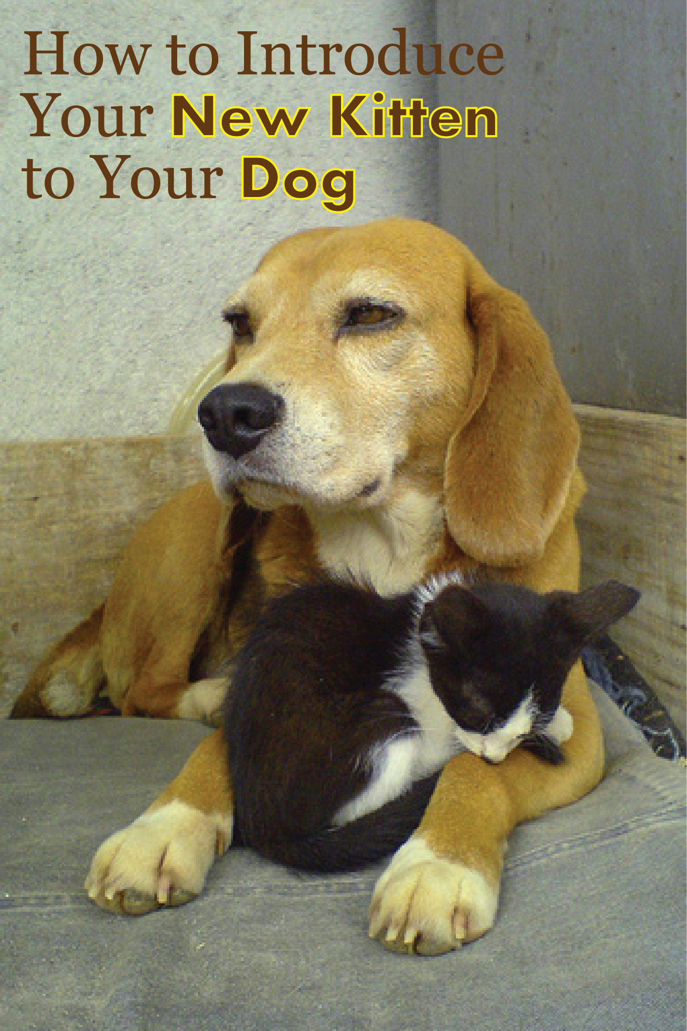How To Introduce Kittens To Dogs Your Cats And Dogs Can Get Along Kittens Dogs Animals Friendship