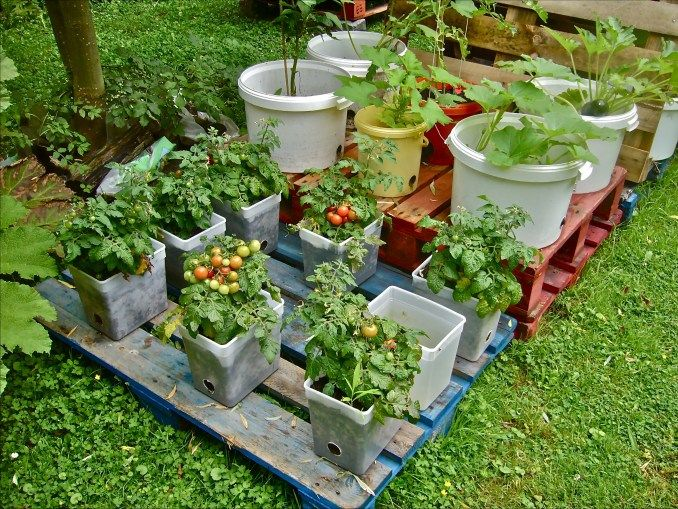 Vegetable Garden Containers Ideas: 40 Simple But Beautiful Bucket Gardening Ideas