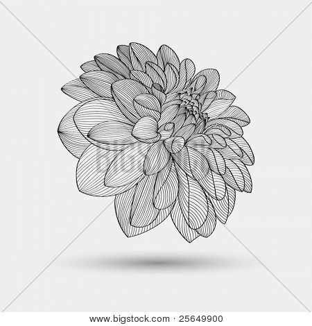 dahlia drawings abstract floral background vector flower dahlia element for design tattoo. Black Bedroom Furniture Sets. Home Design Ideas