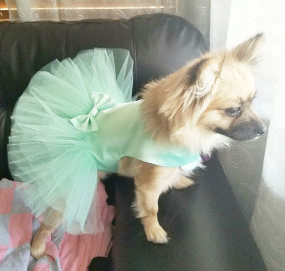 Mint Dog Wedding Dress Blue Tutu