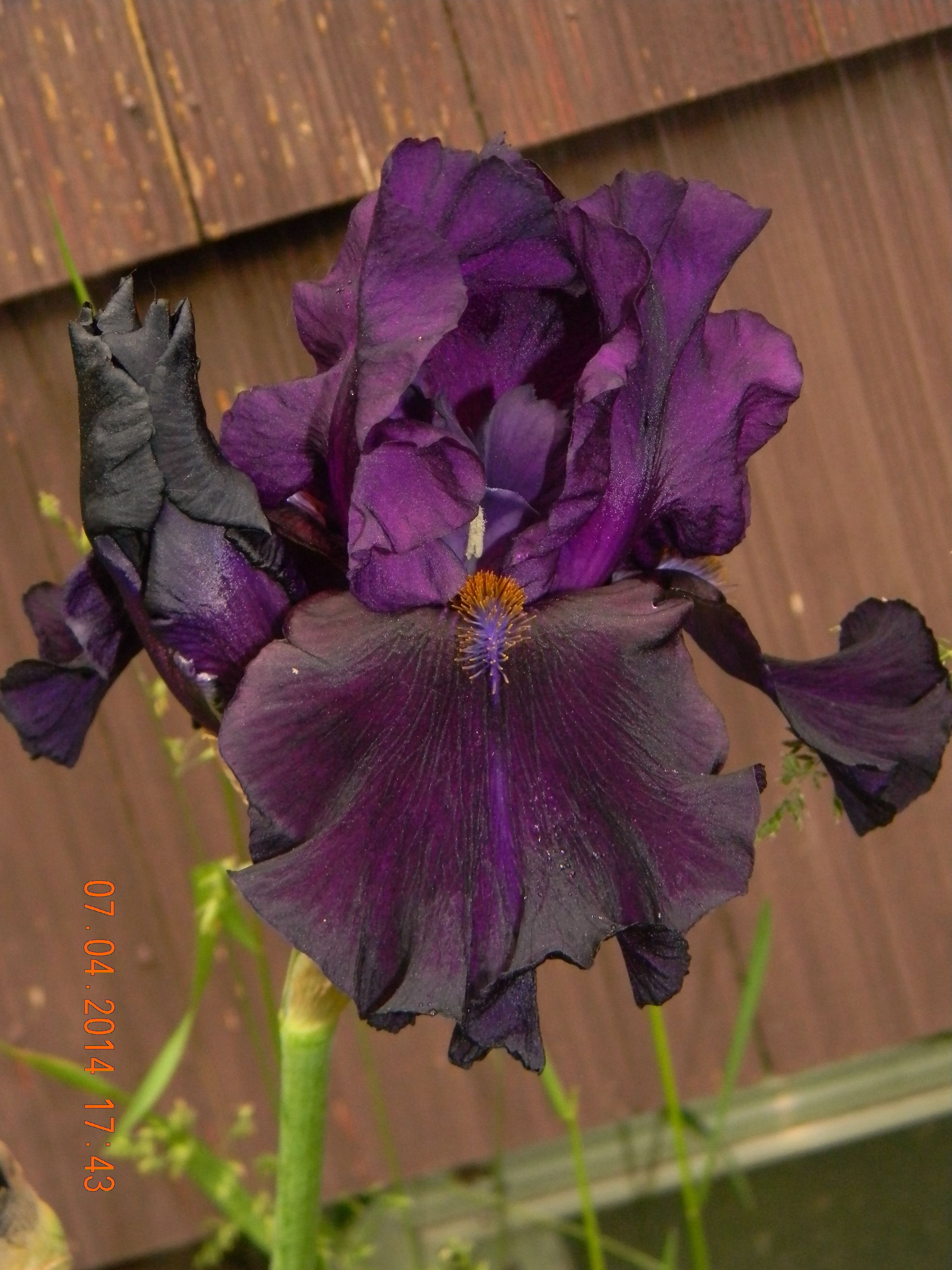 Hello Darkness X Violet Miracle Sdlg 2 From 7 4 14 Season Iris