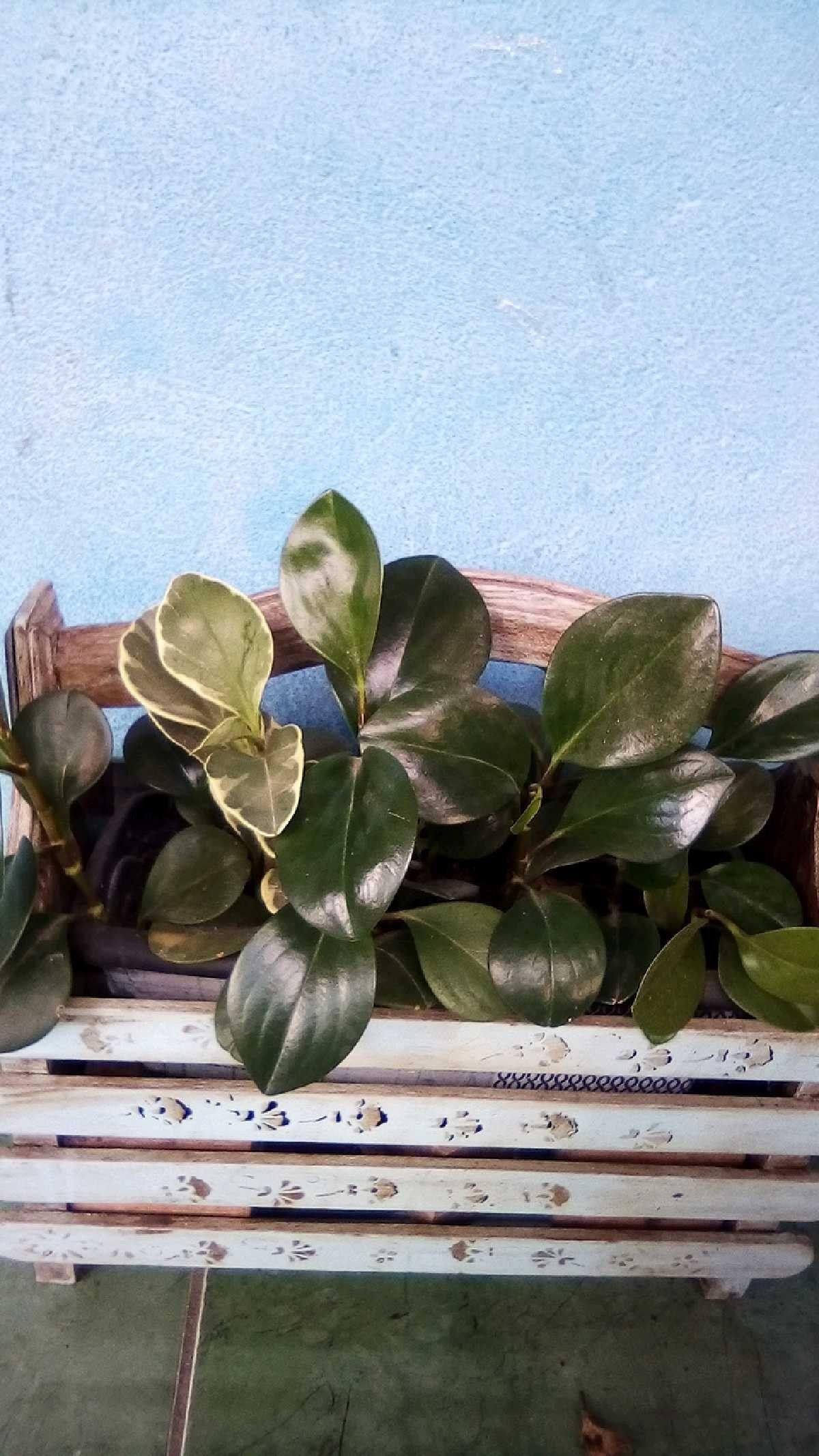 Pin de Janine Cristina em plantas e flores