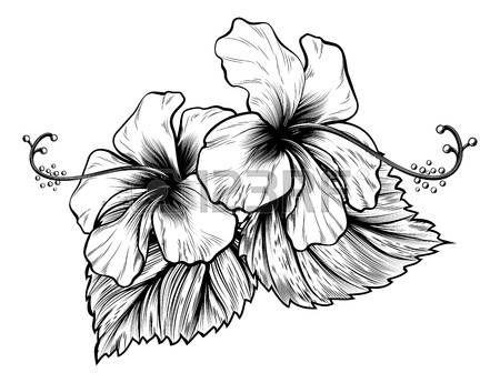 R sultat de recherche d 39 images pour fleur dessin - Dessin d hibiscus ...