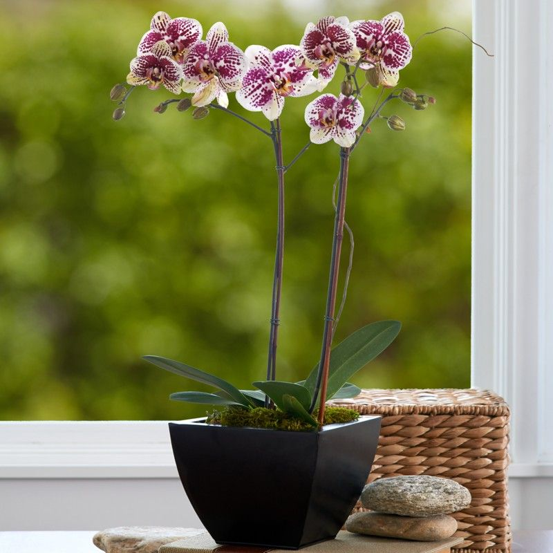 Orchid Flower Delivery Orchids Beautiful Flowers Flowers Delivered