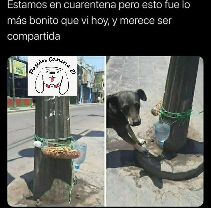 Pasioncanina21 En 2020 Memes De Perros Chistosos Historias De Perros Mascotas Memes