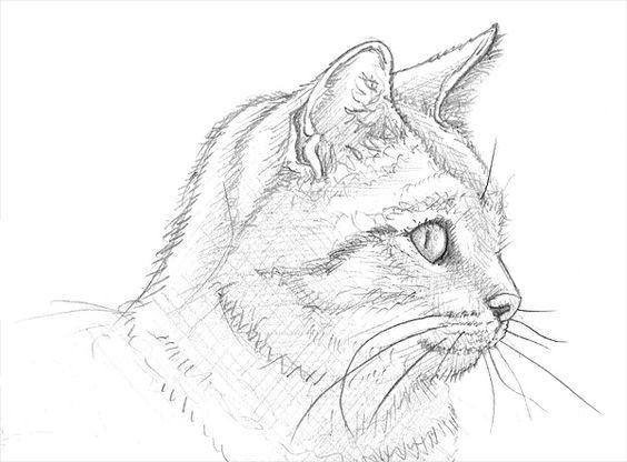 Ein Katzenportra T Zeichnen Lernen Katze Zeichnen Katze Malen Malen Und Zeichnen