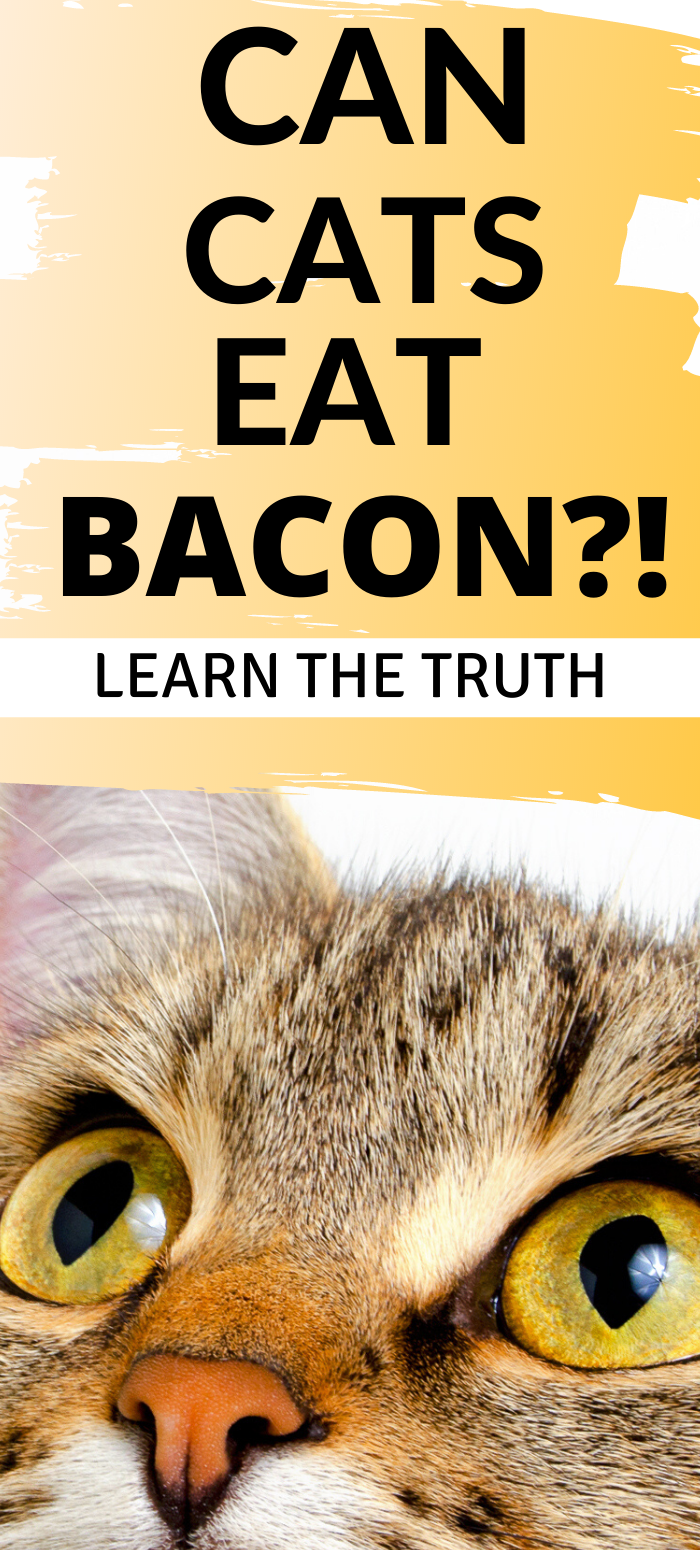 Can You Feed Cats Bacon Live Long And Pawspurr In 2020 Cat Biting Declawing Cats Cat Drooling