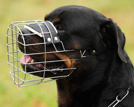 Wire Dog Muzzle for Rottweiler.       We have been working with professional dog trainers and dog handlers for years and none of them have been disappointed in best quality and operating convenience of our dog production! This muzzle is the professionals' pick! It is highly recommended by experienced vets, behaviorists and trainers.  Excellent advancement price cut! Double up to become a lucky possessor of this multitasking merchandise!