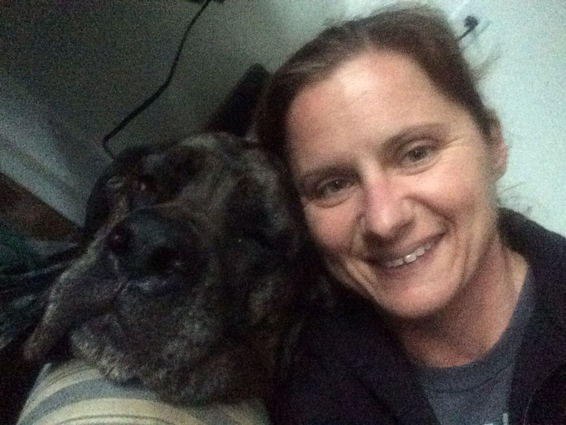 Daniff kiara and i english mastiff great dane animals