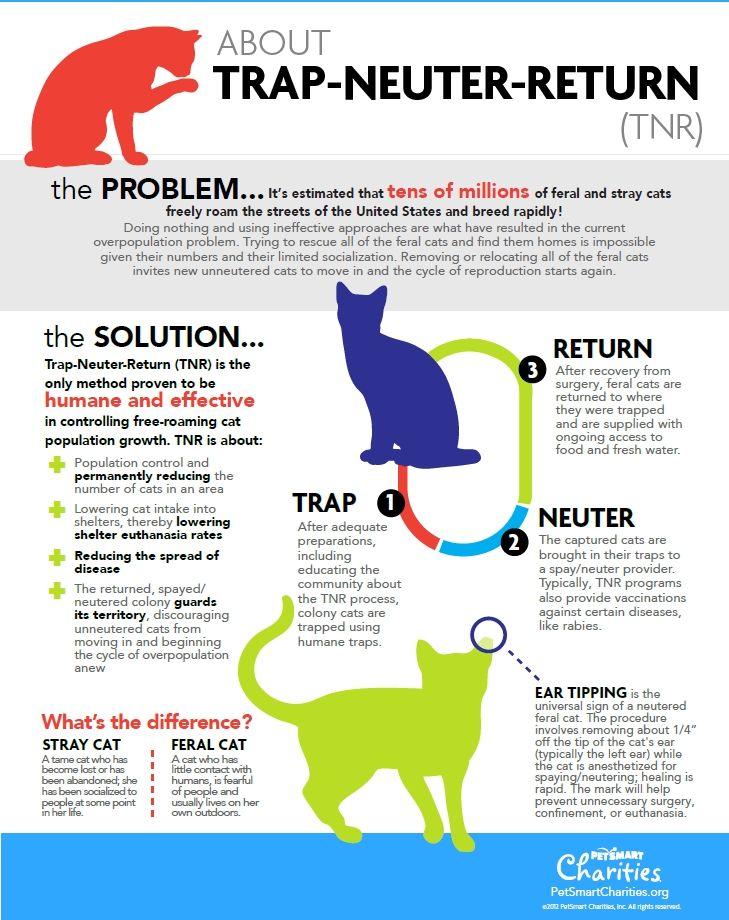 Trap Neuter Return Tnr Ear Tipping Feral Cat Cat Colony Stray Cat Feral Cats Stray Cat Feral Cat Shelter