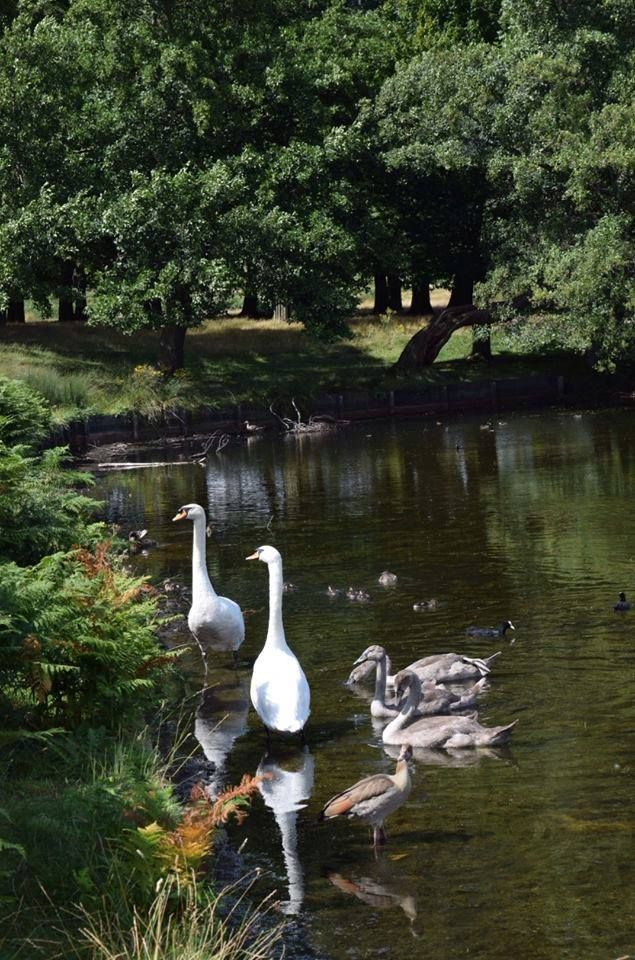 Richmond Park, London Richmond park, London park, London