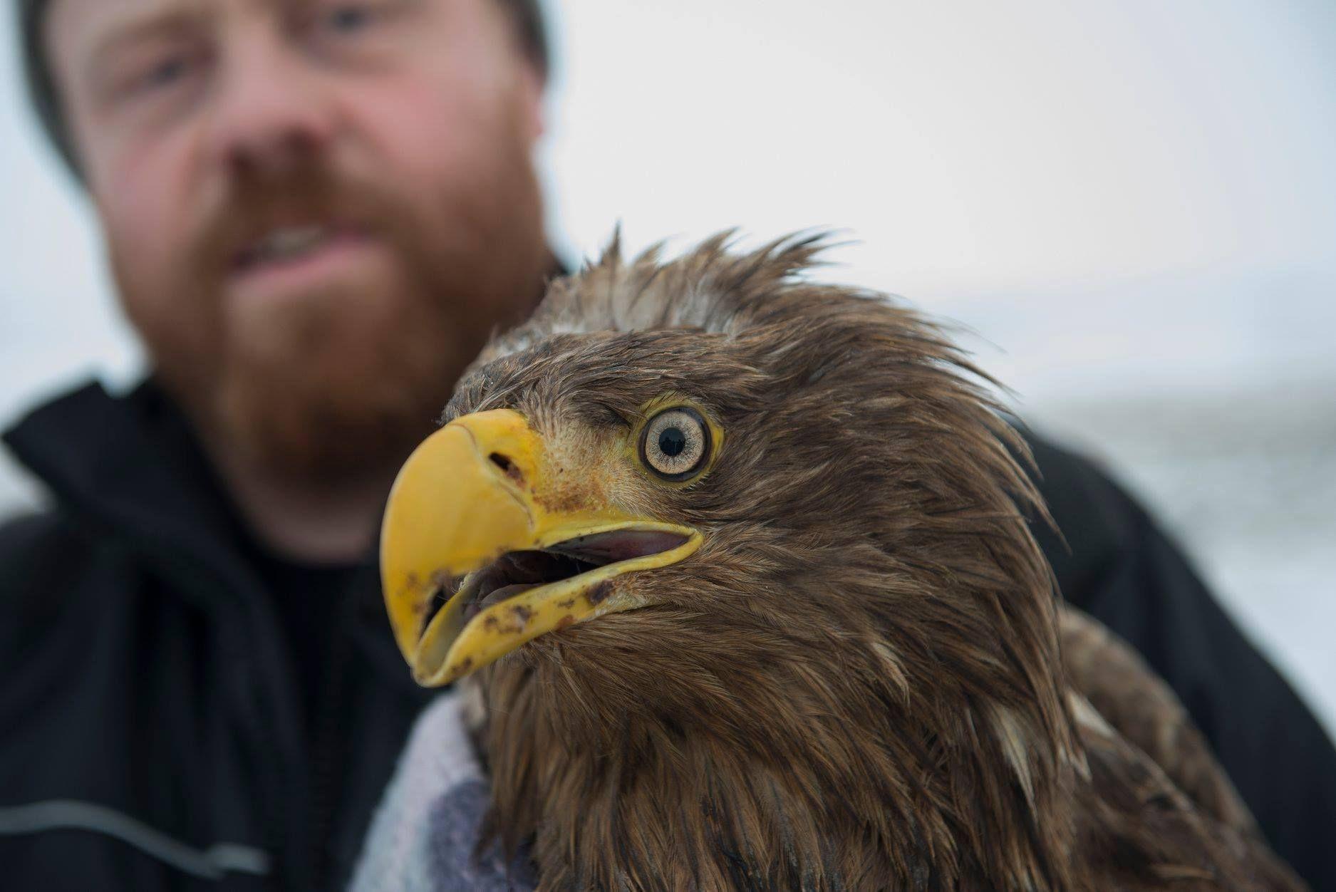 Farmer Saves OldestKnown Living Icelandic Sea Eagle Sea