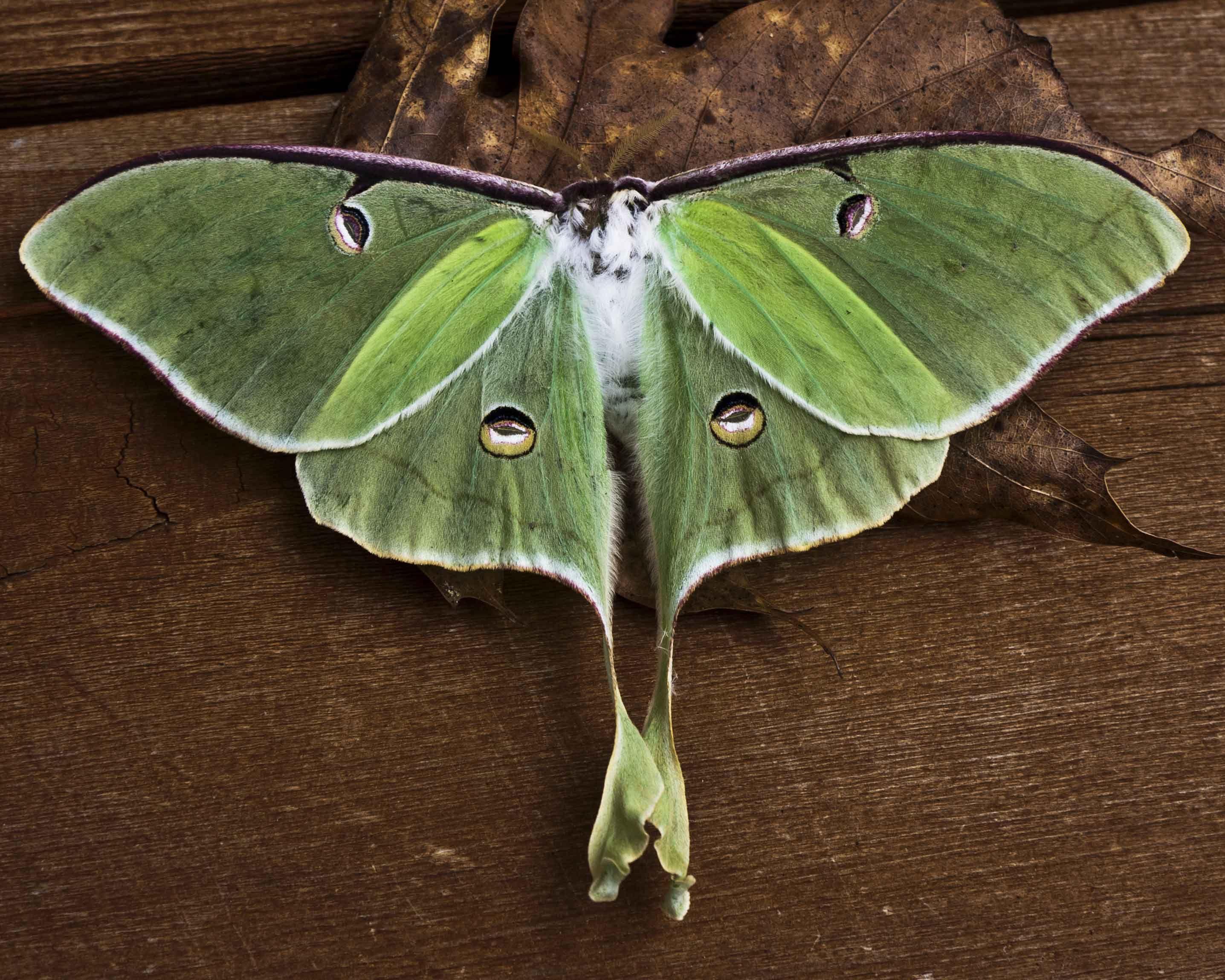 зеленая моль фото функция вышивального
