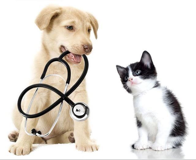 Pin by Arrowhead Animal Health on Arrowhead in action