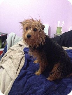 Pin By Cindy Feiler Jampel On Matching Love Yorkshire Terrier
