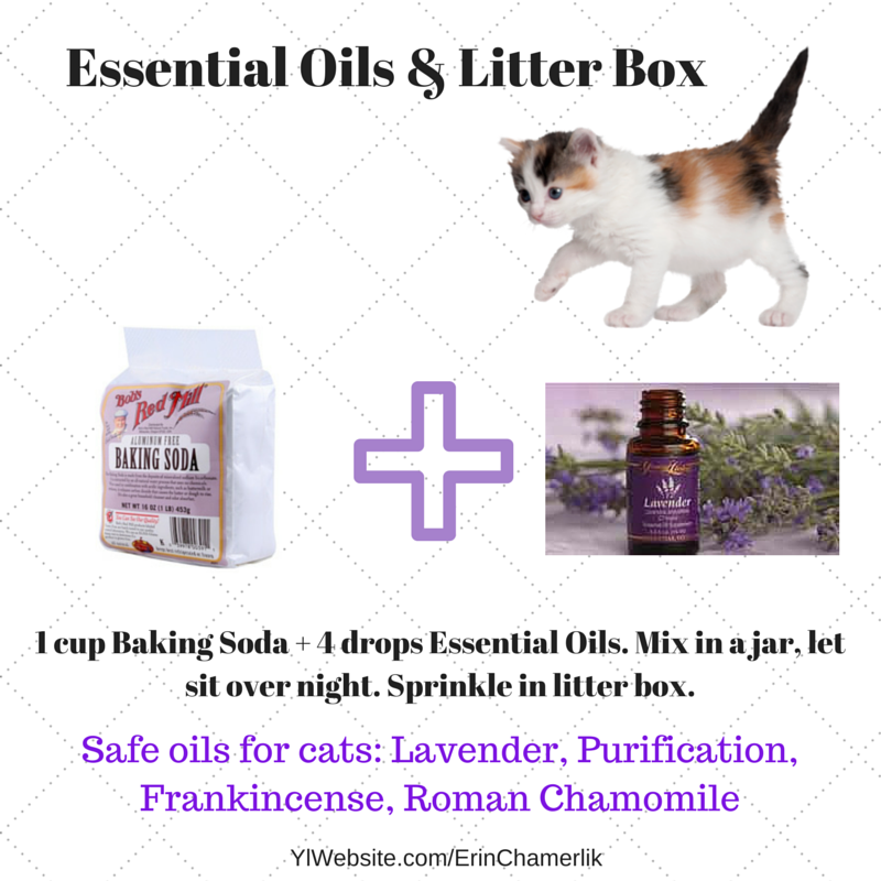 Essential Oils Can Be Safe For Cats Improve The Litter Box And Help Your Pet Pick Up Essential Oils That Will Essential Oils Cats Essential Oils Dogs Oil Safe