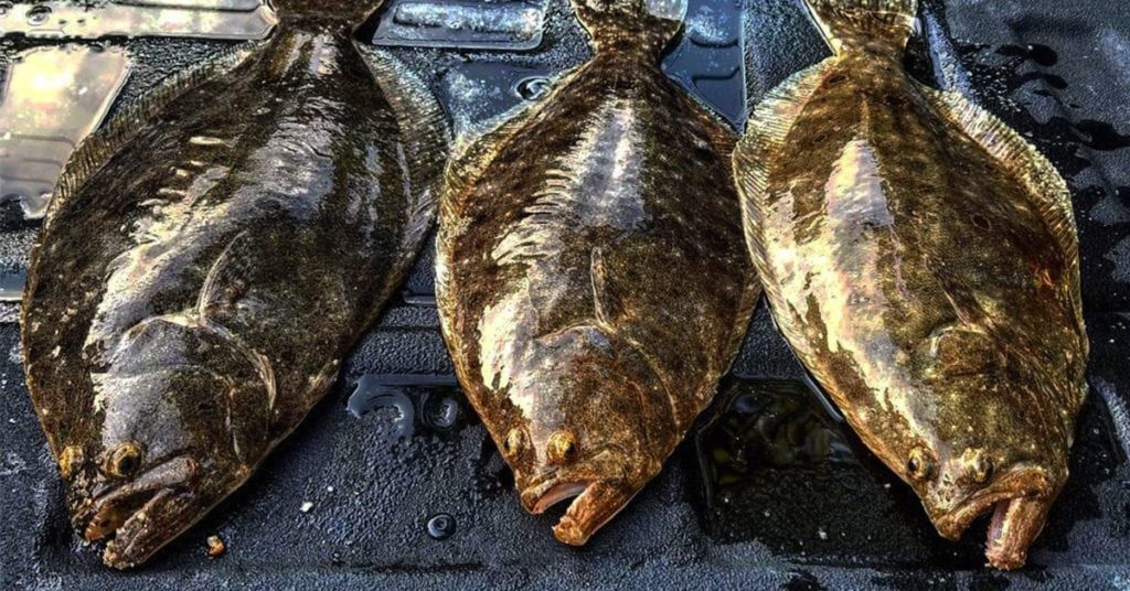 How To Catch Flounder Plus Free Pdf Catch Card Fish Flounder Fishing Fishing Tips